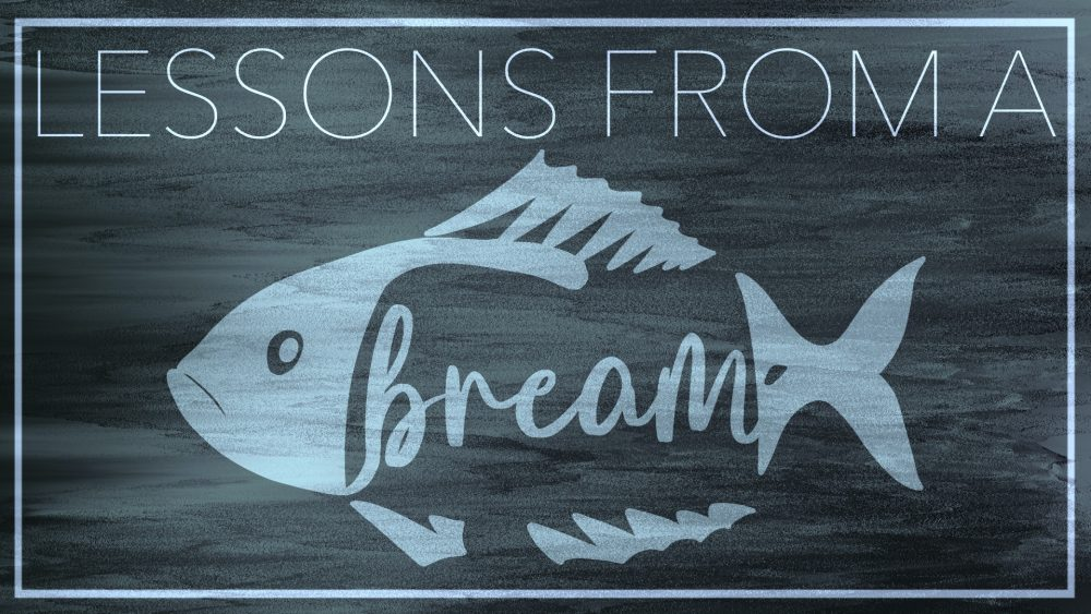 Lessons from a Bream Image